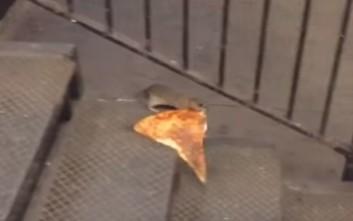 Αρουραίος δίνει μάχη για ένα κομμάτι πίτσα