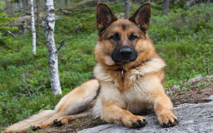 Από την κεντρική Ασία η καταγωγή των σκύλων