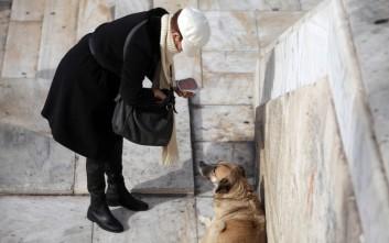 Κινδυνεύει να πάει φυλακή επειδή… τάιζε αδέσποτα σκυλιά