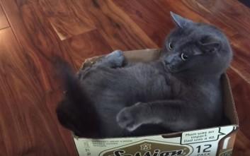 Άγριος τσακωμός γάτας με την ουρά της