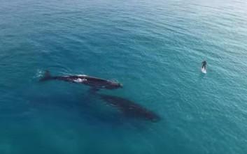 Σέρφινγκ παρέα με δύο φάλαινες