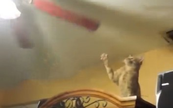 Γάτες δίνουν μάχη με αόρατους εχθρούς