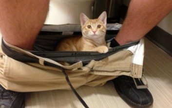 cats_personal_space_26