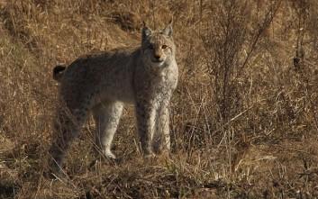 «Παράδεισος» για την άγρια ζωή το Τσέρνομπιλ