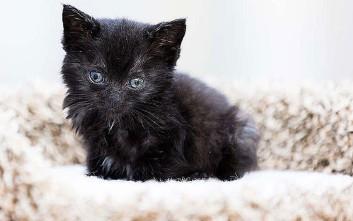 Υπάρχει λόγος που αυτό το γατί ονομάστηκε «Θαύμα»