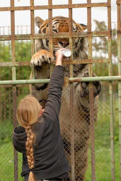 giant-animals-003