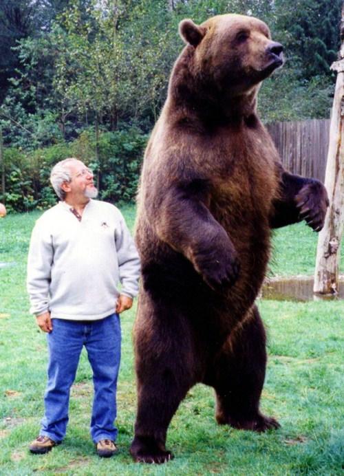 giant-animals-018