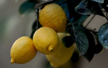 Πέντε χρήσεις του λεμονιού που ίσως δεν ξέρετε