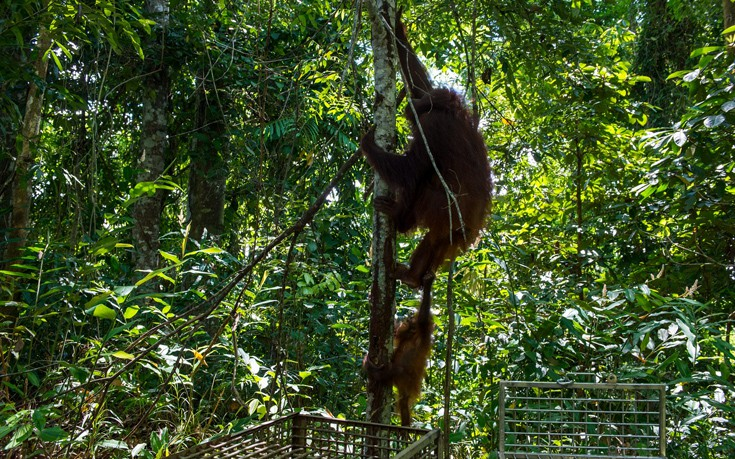Μαμά και κόρη, ελεύθερες, σκαρφαλώνουν και πάλι σε δέντρο. Τέλος καλό, όλα καλά.