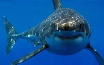 Τα λείψανα 70χρονου βρέθηκαν στο στομάχι καρχαρία - τίγρη