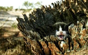 Η Αυστραλία θα εξοντώσει 2 εκατομμύρια άγριες γάτες!