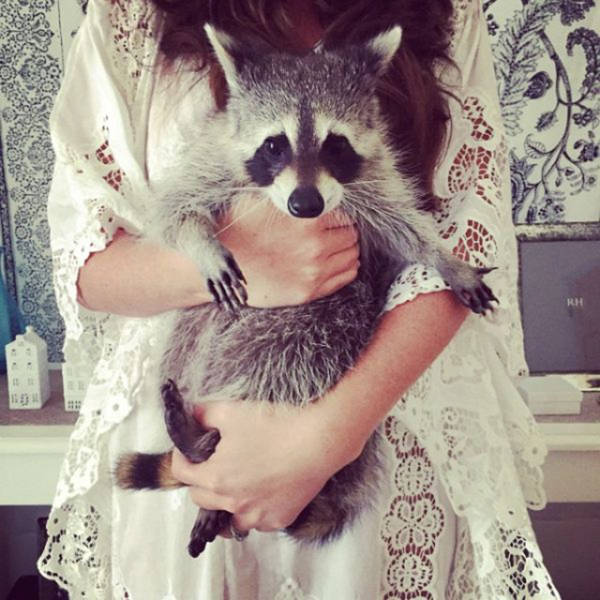 the_baby_raccoon_that_was_raised_by_a_family_of_dogs_640_09