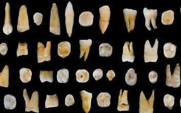 που χρονολογείται από την εξέλιξη των απολιθωμάτων