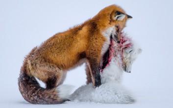 Η άγρια ζωή μέσα από τον φωτογραφικό φακό