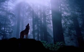 Ιστορικοί πανικοί που προκλήθηκαν από λύκους