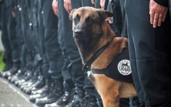 Αυτό είναι το σκυλί που σκοτώθηκε από τους τρομοκράτες