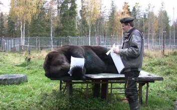 Η αρκούδα που ζωγραφίζει!