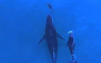 Φάλαινα και δελφίνι βγήκαν για κολύμπι με τα μικρά τους