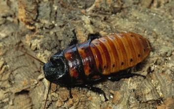 Πώς οι κατσαρίδες θα σώσουν τον κόσμο