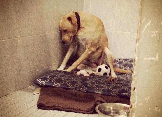 Το πιο θλιμμένο σκυλί στον κόσμο ψάχνει μια οικογένεια για πάντα