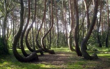Το δάσος με τα 400 στραβά δέντρα!