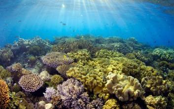 Εξαιρετικά νέα για τον Μεγάλο Κοραλλιογενή Ύφαλο