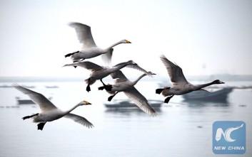 Το μακρύ ταξίδι των μεταναστευτικών πουλιών