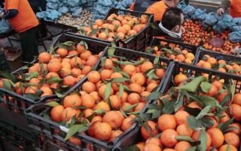 Δωρεάν διανομή οπωροκηπευτικών στους δικαιούχους της Ανατολικής Αττικής