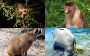 Δέκα άγνωστα ζώα πολύ παράξενα και άκρως ενδιαφέροντα