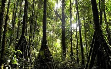 Το μυστηριώδες δάσος του Εκουαδόρ όπου τα δέντρα περπατούν