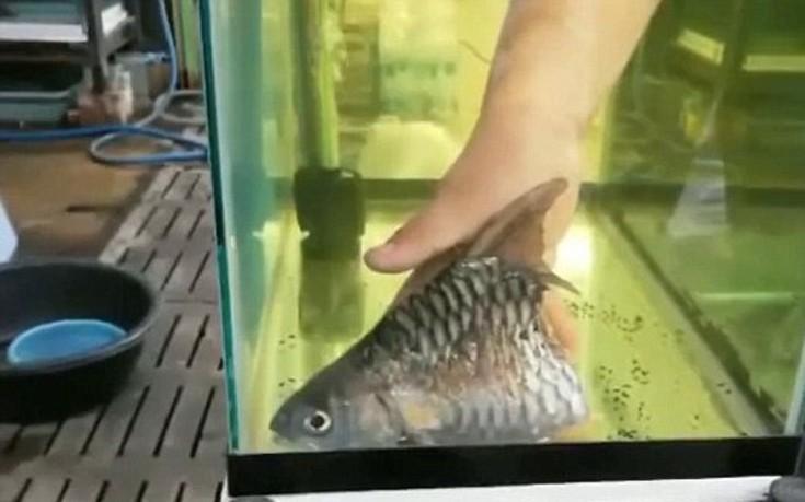 fishss04