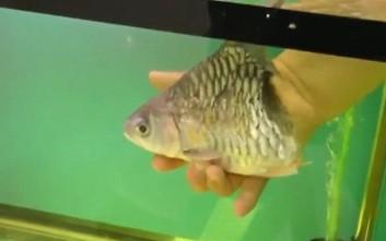 Το... μισό ψάρι που επιβίωσε για έξι μήνες!