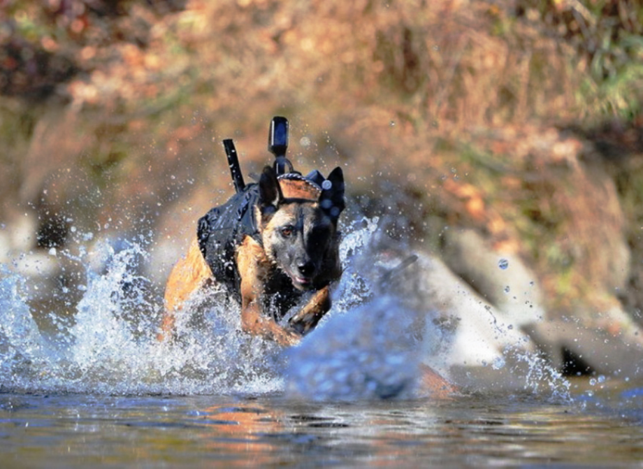 powerful-moments-of-dogs-at-war-13
