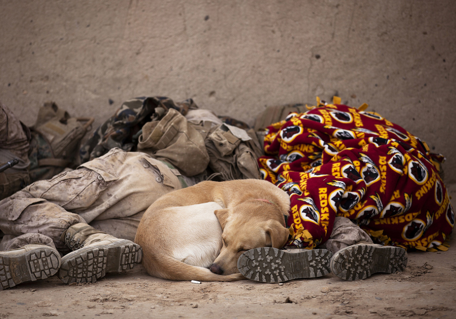 powerful-moments-of-dogs-at-war-14