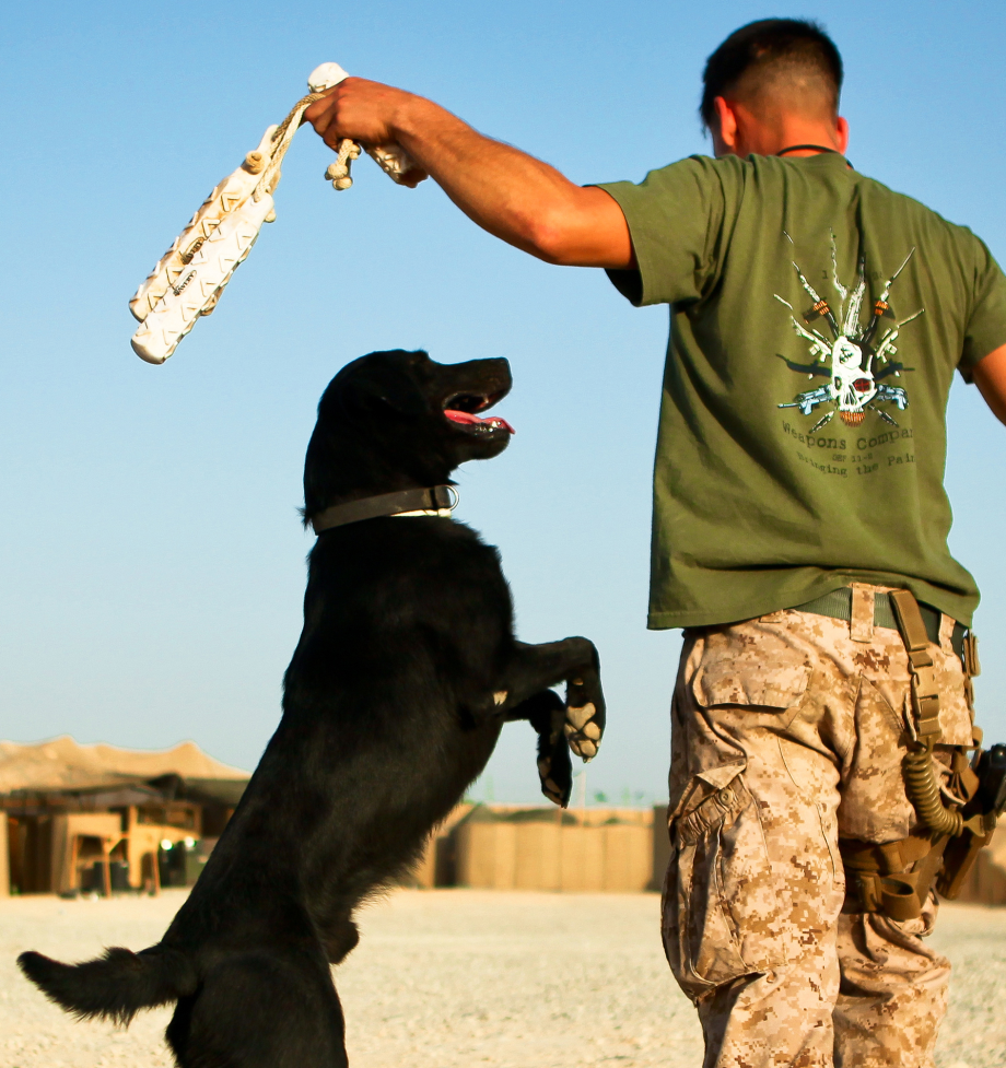 powerful-moments-of-dogs-at-war-20
