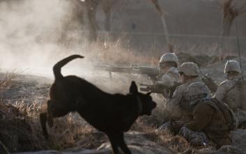 Σκυλιά στα χαρακώματα του πολέμου