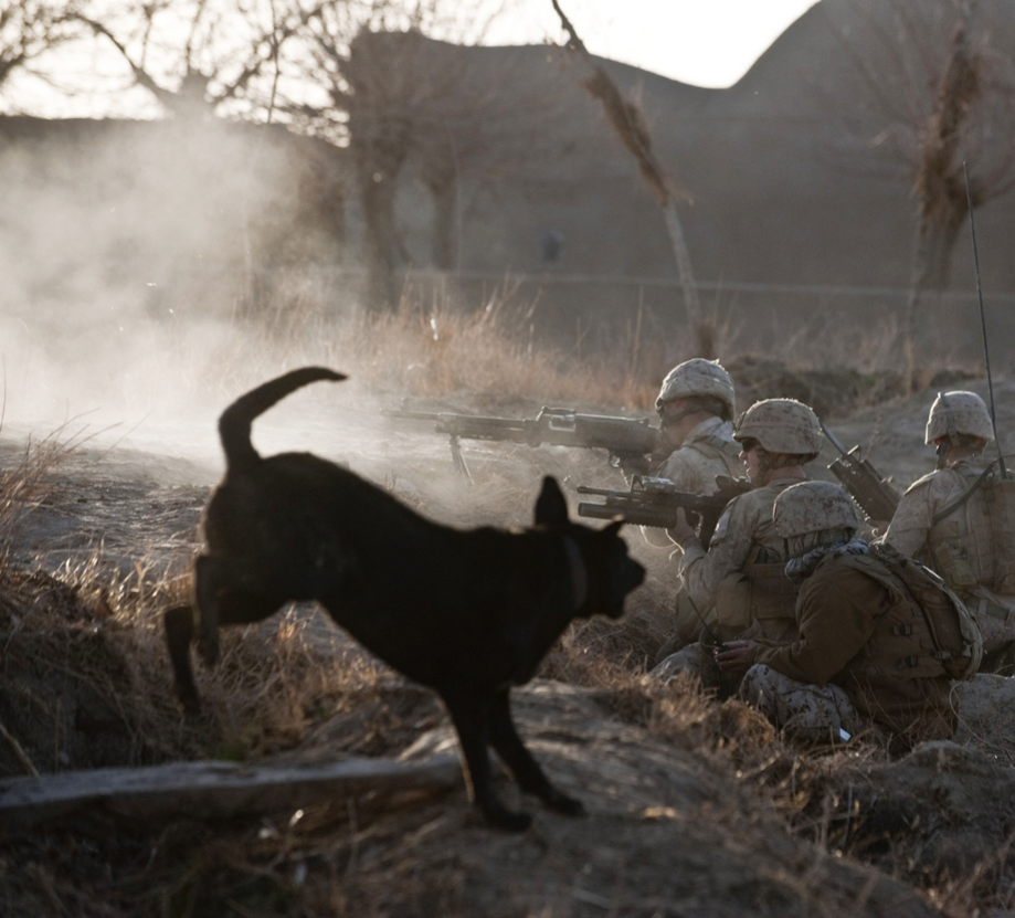 powerful-moments-of-dogs-at-war-36