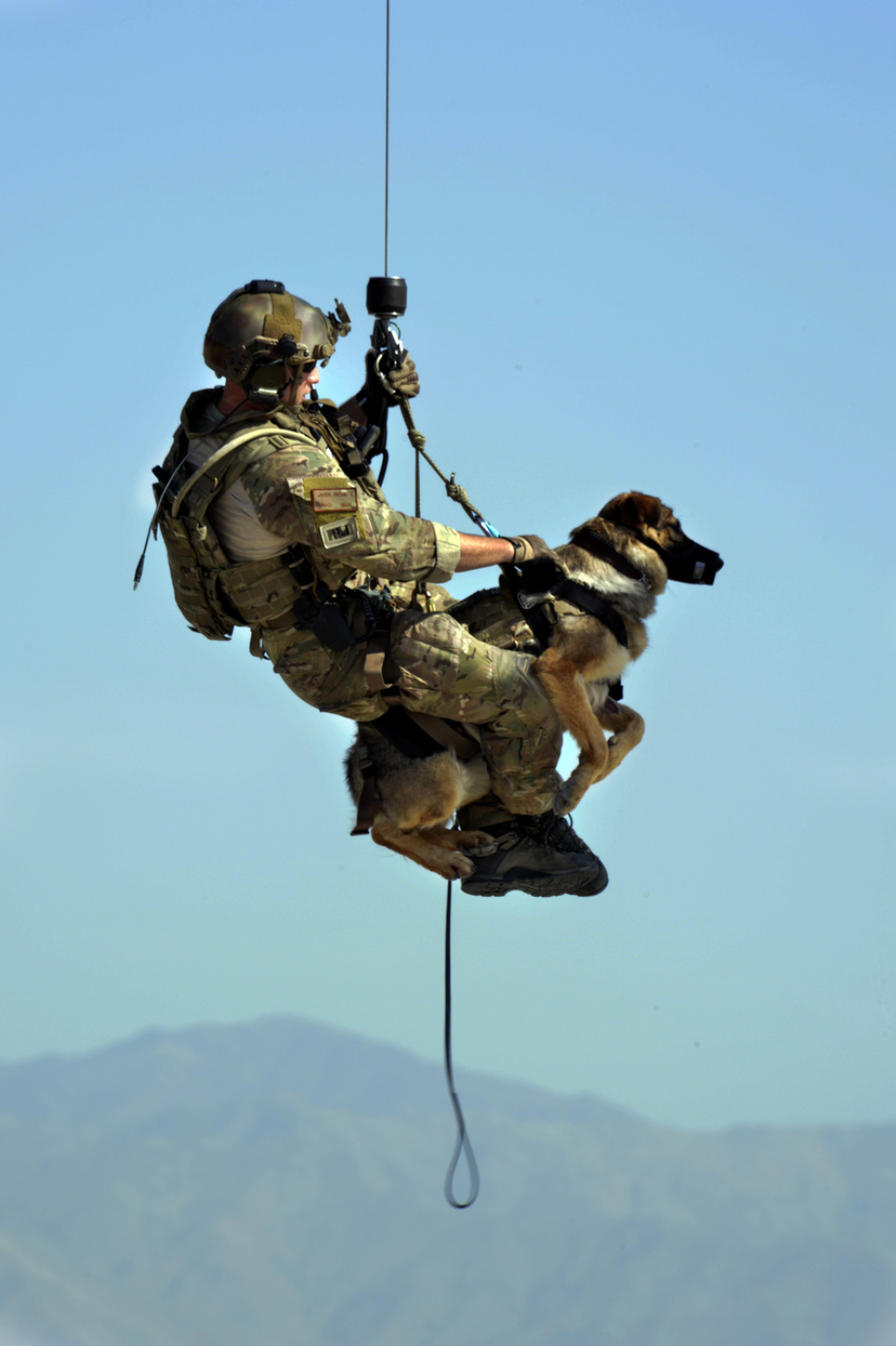 powerful-moments-of-dogs-at-war-39