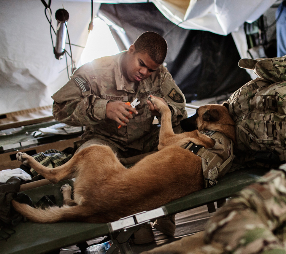 powerful-moments-of-dogs-at-war-57