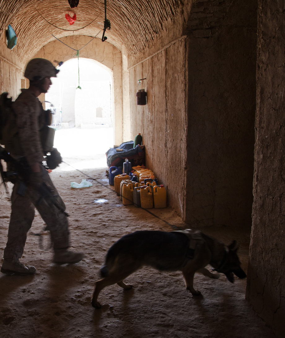 powerful-moments-of-dogs-at-war-66