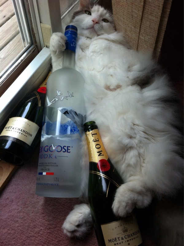 these-animals-know-how-to-party-28-photos-11