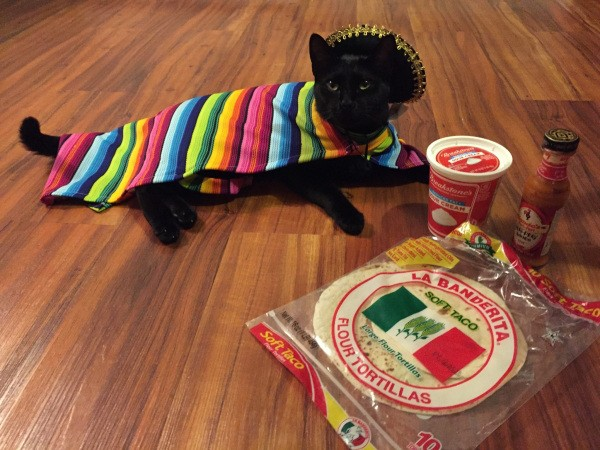 these-animals-know-how-to-party-28-photos-15