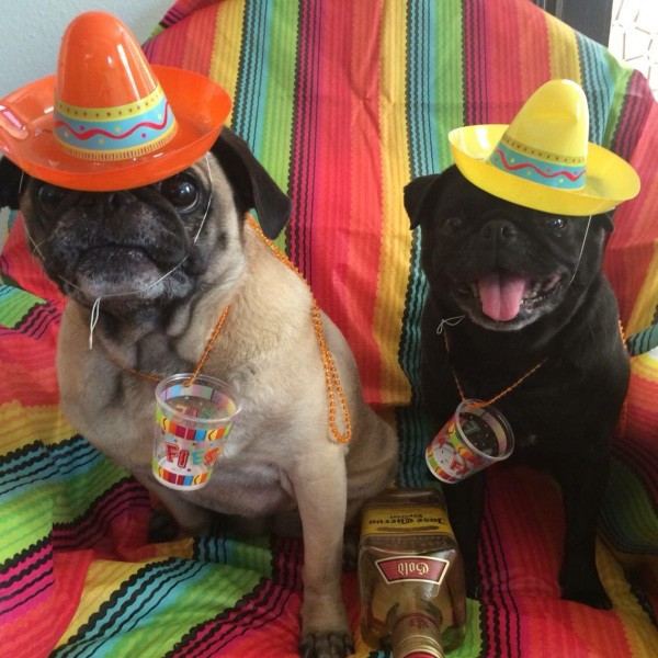 these-animals-know-how-to-party-28-photos-16