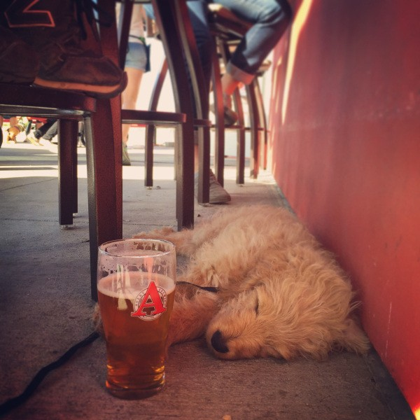 these-animals-know-how-to-party-28-photos-19