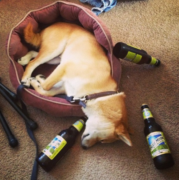 these-animals-know-how-to-party-28-photos-21