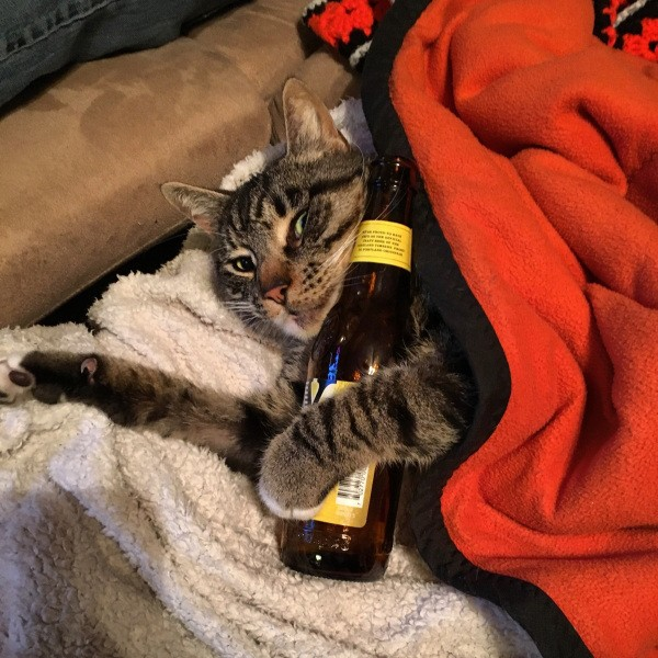 these-animals-know-how-to-party-28-photos-27