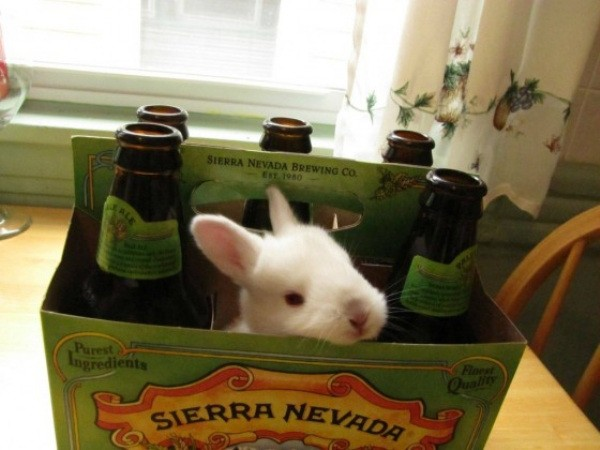 these-animals-know-how-to-party-28-photos-28