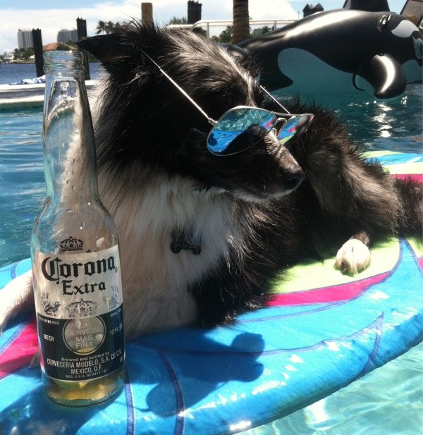 these-animals-know-how-to-party-28-photos-3