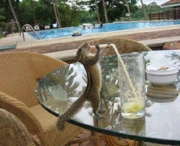 these-animals-know-how-to-party-28-photos-4