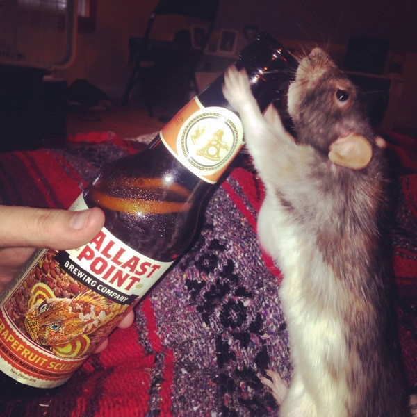 these-animals-know-how-to-party-28-photos-8
